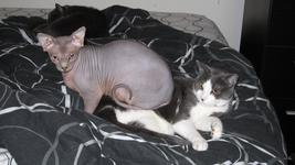 Twigs sat with his back half atop Napoleon, a grey and white furred cat