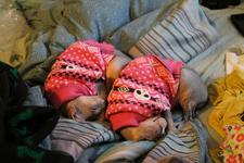 Twigs and Styx curled up next to each other, in identical poses, wearing identical sweaters